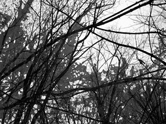 Malignant Woods (Rossdxvx) Tags: trees blackandwhite plant abstract tree art texture silhouette dark woods experimental noir shadows grim outdoor decay michigan surrealism lofi surreal hellish overlay eerie creepy textures overexposed minimalism textured 2016 malignant malignantwoods