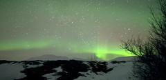 Lifting green 1 (Iceland) (armxesde) Tags: winter tree green night stars island iceland pentax nacht ricoh baum northernlights auroraborealis k3 polarlights nordlichter