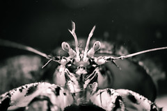 Hermit Crab Ready (FGconclusion) Tags: white black macro water bristol nikon dof under sigma crab hermit d7100