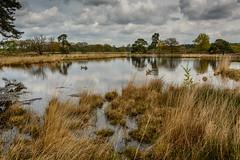 Hatertse Vennen-51 (stevefge (away travelling)) Tags: nature water netherlands birds reflections reeds nederland natuur wetlands hatertsevennen reflectyourworld