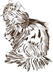 Esquisse d'aprs une photo de Talibanou (Isaszas) Tags: chat cat dessin vectoriel esquisse sketch drawing pinceaux isasza