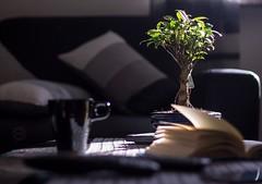 bonsai (vale.rizze89) Tags: home cup coffee 50mm tea bonsai valeweb89