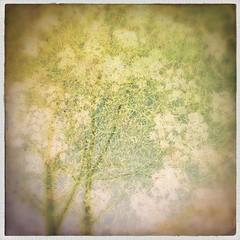 The sky of nature (Sofia Kronholm) Tags: flowers trees flower nature sergio doubleexposure tripleexposure robusta hipstamatic