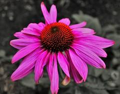 Flower (heiko.moser) Tags: flowers plants plant flower color nature floral closeup canon flora natur pflanze pflanzen natura blume blte nahaufnahme heikomoser