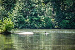 Lake Oolenoy Kayaking-29 (RandomConnections) Tags: us unitedstates southcarolina kayaking paddling pickens pickenscounty lakeoolenoy tablerockstatepark