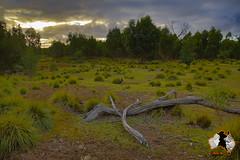 20160411-2ADU-005 Kangaroo Island