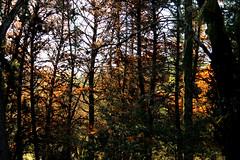 Outono na Mata (Vera Schuck Paim) Tags: red folhas leaves jardim outono graden vermelhas automm boltncio