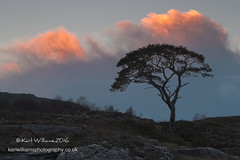 Sunset Pine (Shuggie!!) Tags: trees sunset pine clouds skyscape landscape scotland highlands rocks williams silhouettes karl gloaming torridon westerross zenfolio karlwilliams