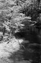 FPP BW IR Film Test (Michael Raso - Film Photography Podcast) Tags: canonftb infraredfilm bwinfrared pomptonlakesnj canon24mmsscf28fdlens fppbwinfraredfilm