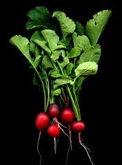 57399.02 Raphanus sativus (horticultural art) Tags: vegetable bunch radish raphanus raphanussativus horticulturalart