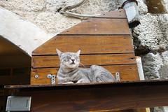 2015 Travel 巴爾幹半島 Balkan (Mo Ching) Tags: 巴爾幹半島 balkan kotor montenegro