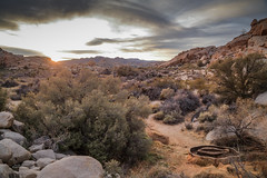 IMG_1497 Joshua Tree (Alex Hsieh ()) Tags:  joshuatree joshuatreenationalpark nationalpark california ca roadtrip 2016 usa travel desert canon6d canon 6d
