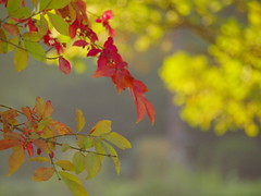 fall is beginning_9251037 (hans 1960) Tags: autumn herbst herbstzeit bltter leayes colourful trees farben red colour licht bokeh fall nature natur light green grn wald forrest germany outdoor