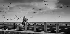Old man and the sea / Viel homme et la mer (The Black Fury) Tags: noir et blanc black white vlo cycle paysage harbor port en bessin mer sea photos exterieur normandie water bw old man cloud bird portrait portraiture bike seagull personnes people cyclist ocan normandy canon 700d test sigma 1770mm f284 dc os hsm contemporary pepo france