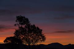 Sunrise (Stig-Arve Holmem) Tags: sunrise tree beautiful scenery nature view orange purple blue clouds sky morning stunning mountains silhouette canon eos 70d lesund norway