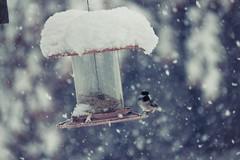 Snowbird:) (TinyAcorn) Tags: