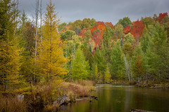 DSC09105 (ansonredford) Tags: autumn usa fall mi michigan jordanrivervalley sonydslra350 ansonredford