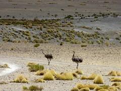 Woestijnen en meren - dag 2 en 3-15