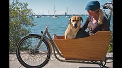 Introducing the METROFIETS Dog Box (METROFIETS) Tags: ocean bike bicycle palmtree tropical sarasota beachbike cargobike beachcruiser bikeportland bikesrule bikepdx metrofiets vehicleforchange bikesrq palmtreesandbikes tropicalbikes