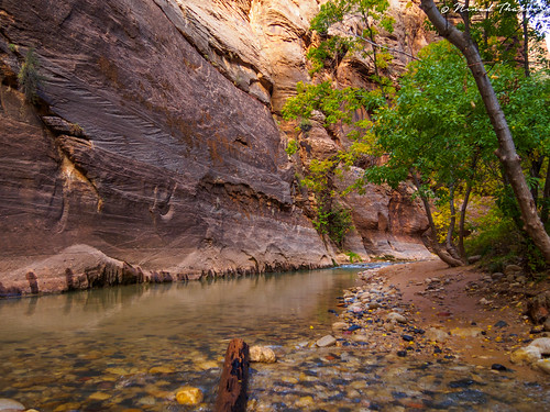"""Virgin river narrows • <a style=""""font-size:0.8em;"""" href=""""http://www.flickr.com/photos/59465790@N04/15690610656/"""" target=""""_blank"""">View on Flickr</a>"""