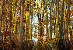 mystic forest (b.hessmann) Tags: park autumn nature forest canon eos colorful outdoor herbst natur grafik 300mm promenade nrw tamron schloss garten baum mnster mnsterland abstrakt westfalen 70mm nordrhein botanischer