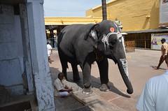Kanchipuram, India (josepsalabarbany) Tags: travel sea people sculpture sun india elephant art beach church architecture temple asia god fort stupa delhi bangalore goa victorian fatehpursikri streetlife tajmahal kerala curry journey mango ganesh varanasi tropical species maharashtra punjab mumbai karnataka thanjavur hindu chennai siva mysore bengal amritsar jaipur apsara oldcity tyger rajasthan jewel gujarat ranakpur jodhpur ganges parvati khajuraho benares ghat moguls ellora konark kanchipuram rathas orchha rajput uttarpradesh jainism gopura kalasha shikhara mandapa vimana amalaka delhijodhpur kobalam