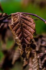 Autumn Slide (ianmiddleton1) Tags: autumn fall leaves canon scotland glasgow copper tamron autumnal hdr sliders hss bellahoustonpark sliderssunday