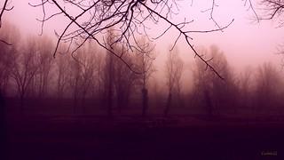 Ad Imola oggi nebbia...At Imola, today the fog ...