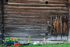 Älvdalen (xibalbax) Tags: wood flower grass wall canon sweden 7d dalarna älvdalen 1755mm canoneos7d
