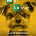 The Next Lassie - Barking Bad