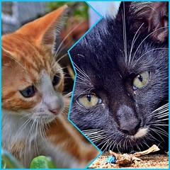 THE MORNING AFTER (Gerard Kaman) Tags: world camera new cats news color art nature animals cat advertising nikon kitten kittens cannon kittenmagazine