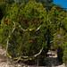 Trees_of_Loop_360_2014_051