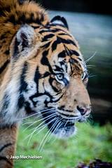 JM-10.jpg (Jaap Mechielsen) Tags: arnhem nederland burgerszoo dierentuin gelderland