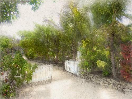 Caribbean garden, Grand Cayman Island
