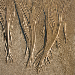 inverloch-3368-ps-w (pw-pix) Tags: light shadow beach wet water sand patterns traces australia victoria relief shade lowtide damp inverloch threedimensional trickles flatrocks southgippsland basscoast