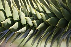 IMG_6440 (unnamedcrewmember) Tags: flowers orchid garden spring outdoor pflanze may hannover mai exotic botanic orchidee blume blüte garten botanischer exotisch herrenhausen herrenhäuser