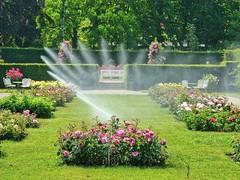 Views to the Park 05 (MJWoerner49) Tags: roses summer spring badenbaden rosegarden watering cooling hedges summerday gnneranlage lichtentalerallee lichtentaleralley
