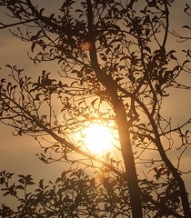 Plum Tree 20140806 (caligula1995) Tags: sun clouds plumtree 2014