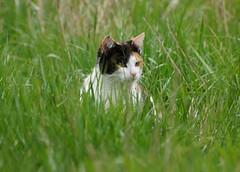Young Lady (Jurek.P) Tags: cat spring friend meadow jurekp sonya77