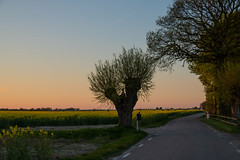 Country road at Sunset (Infomastern) Tags: road sunset field landscape countryside raps canola vg rapeseed solnedgng landskap sdersltt flt landsbygd