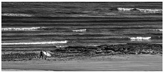 Breaking Waves (focusmania) Tags: sea beach wales boards nikon surf waves surfing gower mumbles langland d7000