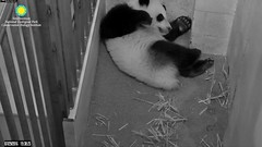 2016_07-29k (gkoo19681) Tags: beibei sleepyhead squished toocute sillygoober sillycubby stillfit ccncby nationalzoo