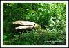 The Fish Lost On Trail - Everett Crowley Park N17976e (Harris Hui (in search of light)) Tags: harrishui nikond300 nikonuser nikon d300 vancouver richmond bc canada vancouverdslrshooter sigma1770mm