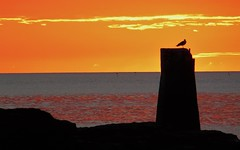 Seagull Sunrise Silhouette (Gilli8888) Tags: whitleybay sunrise lighthouse stmaryslighthouse tyneandwear dawn clouds sky light batesisland coast eastcoast northsea coastline seascape silhouette