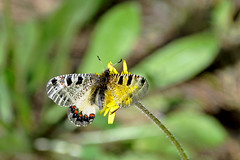 Butterfly with 3 wings (elinay76) Tags: butterfly wing insect strange