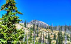 The Lick Creek Road (jimgspokane) Tags: thelickcreekroad mountains forests trees idahostate nikonflickraward wonderworld