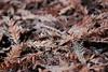 Golden Gate Castoffs (Zee Jenkins) Tags: foliage tree faded compost organic