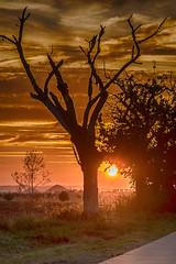 Sun between the trees - Die Sonne zwischen den Bumen (ralfkai41) Tags: landscape sunset sonne himmel outdoor natur clouds hdr baum tree abendrot sky sonnenuntergang landschaft sun wolken nature