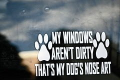 Nose Art (MTSOfan) Tags: dog window fun eyes glare schipperke decal noseart