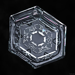 Snowflake-a-Day #19 (Don Komarechka) Tags: snowflake snow macro ice water frozen crystal geometry flake tiny hexagon fractal mpe focusstacking